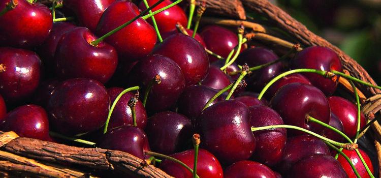 Как сделать вино из вишни? Делаем вкусное домашнее вишневое вино