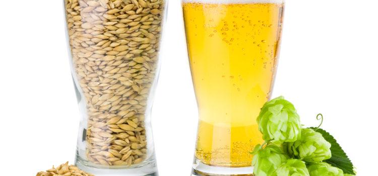 Как приготовить пиво дома. Делаем вкусное пиво самостоятельно
